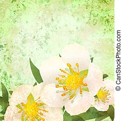 wild roses white flowers grunge vintage style illustration