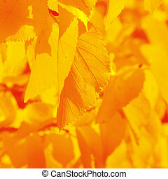 serrated autumn leaf
