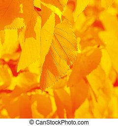 serrated autumn leaf