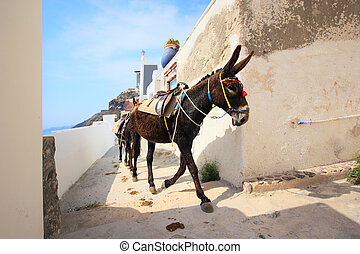A donkey used for carrying tourists up from the harbour at...