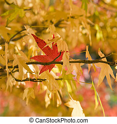 one bright red autumn leaf stick on a yellow trees;