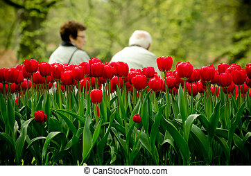 Elderly couple sit in a park - Red tulips in a park with...