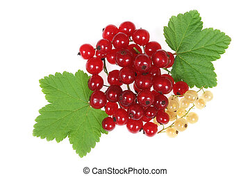 Currant fruit - Red and white currant fruit and green leaves...