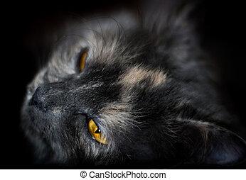Beautiful portrait of a grey cat