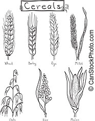 Cereals hand-drawn illustration - wheat, barley, rye,...