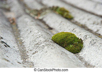 Moss on a roof - Moss on an undulated roof