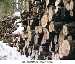 stack of tree trunks - stacked tree trunks logs pile in...