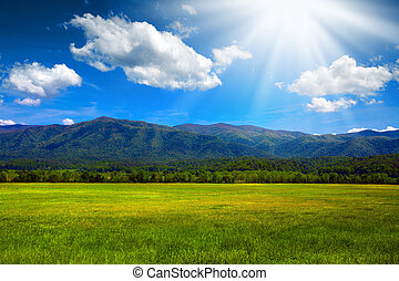 Sunny mountain meadow - Green lush meadow in the mountains...