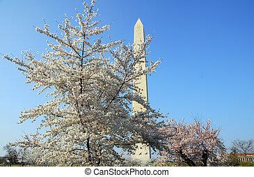 Washington DC Monument Cherry Blossom