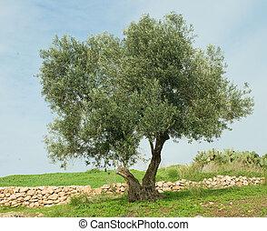 Tree at Ramat hanadiv, Israel