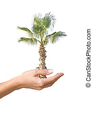 Palm tree in hand as a symbol of nature potection