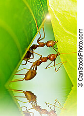 red ants team work in building home