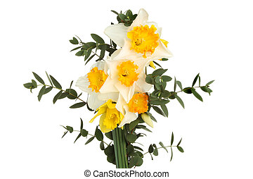 Daffodil flowers and foliage - Daffodil flowers and...