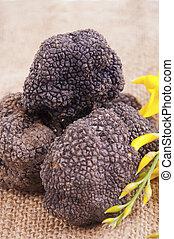 Freshly harvested black truffle - Black truffle with freshly...