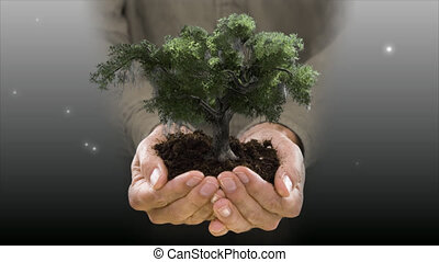 holding an oak tree - man holding soil & oak tree blowing in...