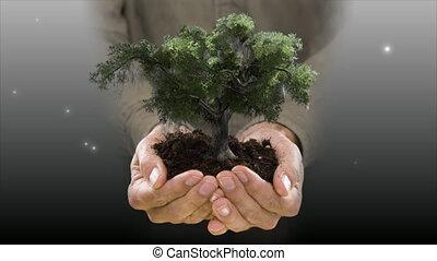 holding an oak tree