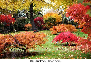 Autumn Japanese garden - Japanese style garden in autumn