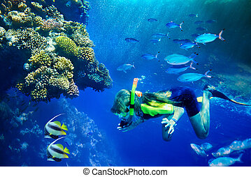 Group of coral fish in blue waterScuba diver