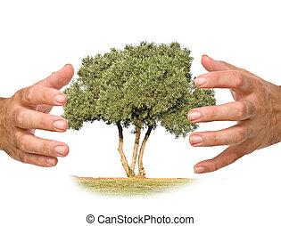 protegendo, árvore, mãos