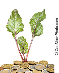 beetroot growing from money