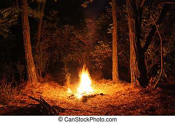 Fire burning at night in a forest glade