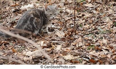 Kitty - Bad Smell - Feral kitty smells something bad in...