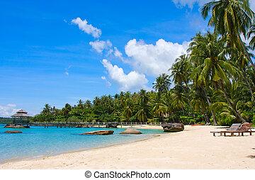 bonito, tropicais, praia, ilha, Koh, Kood, tailandia