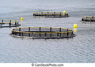 Aqua farming - Round net for aqua farming fish industry