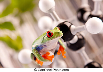 Frog in labolatory - Tests on animal concept