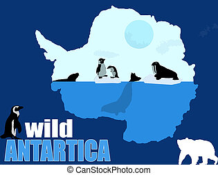 Wild Antartica poster background, vector illustration