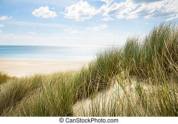 sand dunes - sunny beach with sand dunes and blue sky