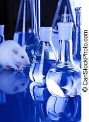Rats in Laboratory