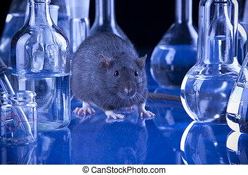ratas, Laboratory!
