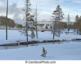 Bison, Upper Geyser Basin, Winter, Yellowstone NP - Bison at...