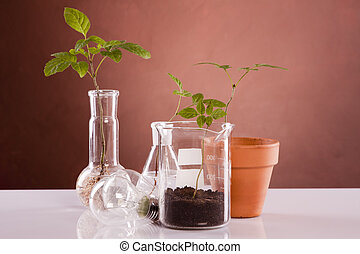 Genetically plants