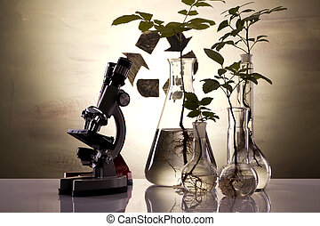 Plants in lab - Genetically plants