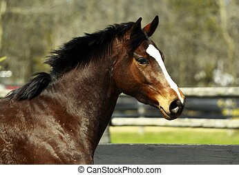 Thoroughbred Filly - Thoroughbred filly running in her...