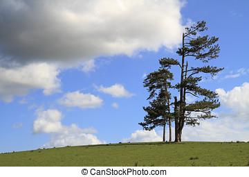 站立, 樹, 領域, 單個, 小山, 單獨