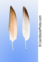 Feathers isolated on blue backgrouns