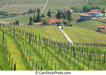 Vineyards of Piedmont at spring. Northern Italy.