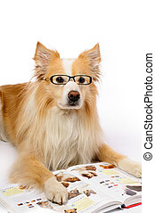 Dog reading book