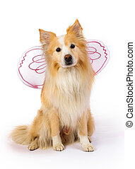 Border Collie dressed as a fairy