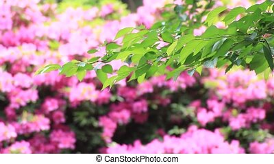 The fresh green and azalea - I took the fresh green backed...
