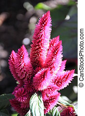 Fuzzy Pink Flower
