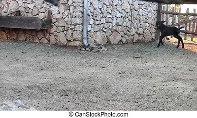 Baby donkey run on the farm