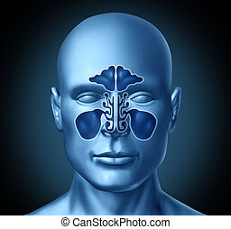 Sinus cavity on a human head representing a medical symbol...