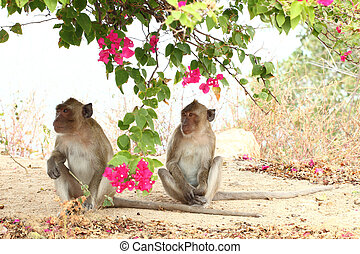 Crab-eating macaque monkey of southeast asia sitting under...