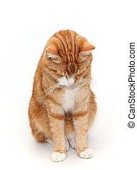 sad tom cat