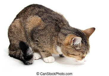 很少, 吃, 貓