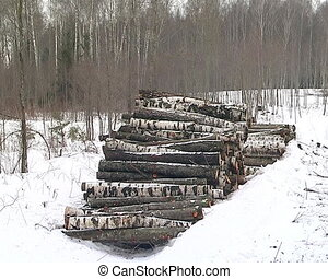 stacked birch tree trunks logs in winter forest timber...